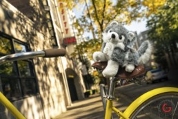 bike riding dog - social media marketing strategy