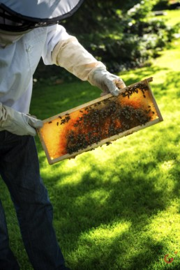 Beekeeper with Beehive at The Hotel Baur au Lac - Professional Food Photography, Culinary Photographer, Restaurant Photos