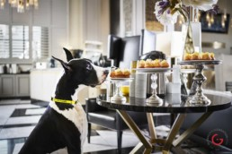 Great Dane Dreams of Cupcakes - Photographer Lifestyle Photography Wardrobe Stylist