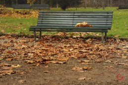 Leaves in a Bench in Milan, Italy - Travel Photographer of Italy Photoshoots, Italy Photography