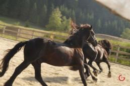 Running Horses in Swiss Monastery - Travel Photographer and Switzerland Photography